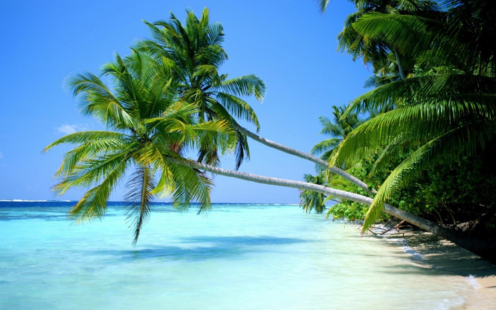Travel Idea India