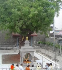 Gurusthan tree