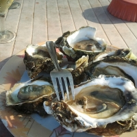 Oysters, Popular Dish At Cavelossim